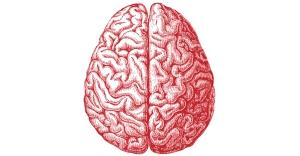 Brain_picture